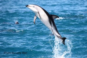 Dolphin Jump-website